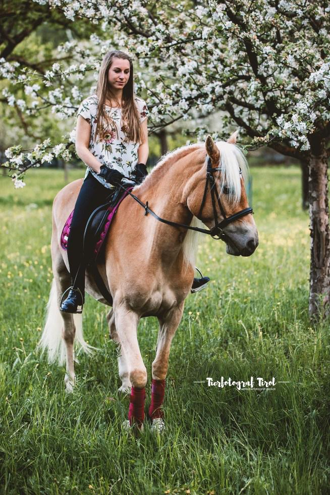 Pferdefotograf Tirol | Pferdefotos