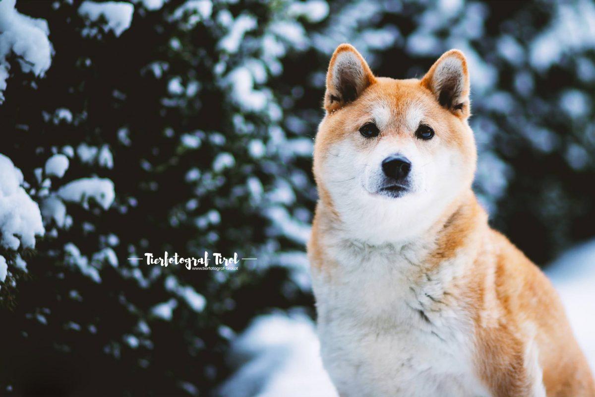 Hundefotograf Tirol | Hundefotos vom Profi
