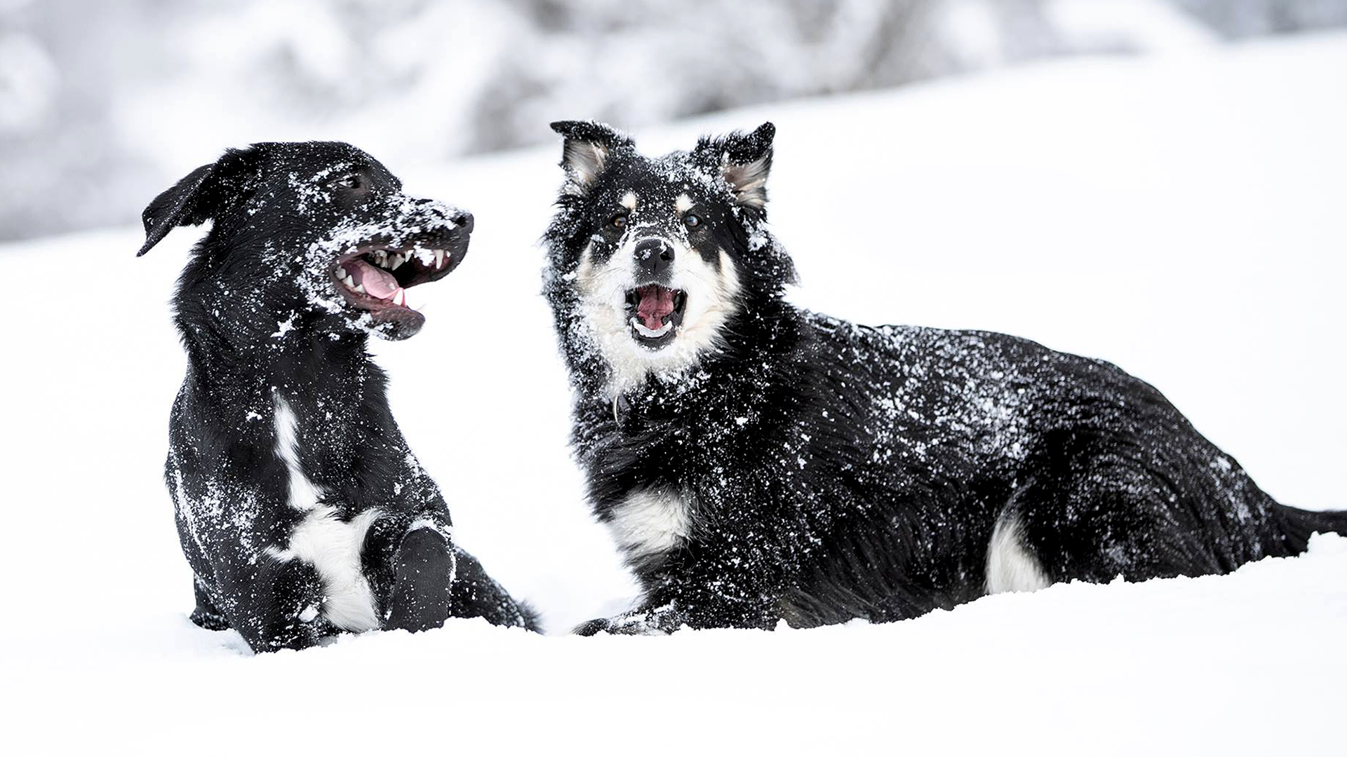 Tierfotograf Tirol